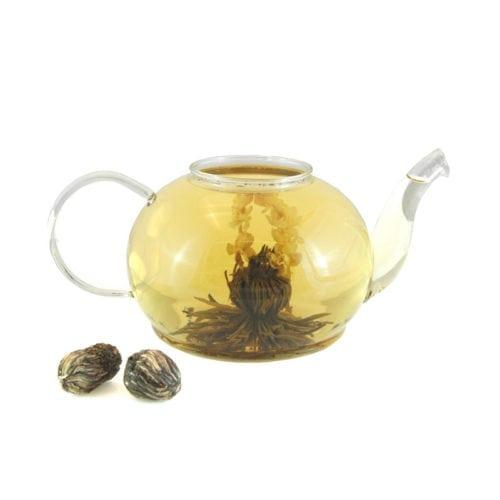 Blooming-Tea-Jasmine-Tree-7-27-1134_7-27-1134